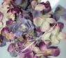 Лепестки роз  (Сиреневые)  FL001
